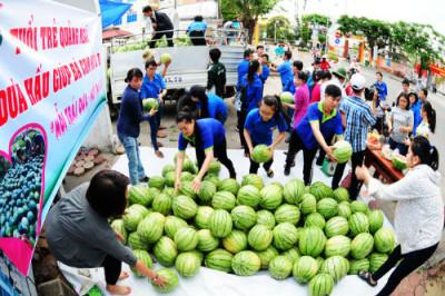 """Tỉnh Đoàn Quảng Ngãi đứng ra làm đầu mối thu gom đã trắng trợn """"ăn chênh"""" của nông dân những 2000 đồng/kg dưa. Ảnh nld.com"""